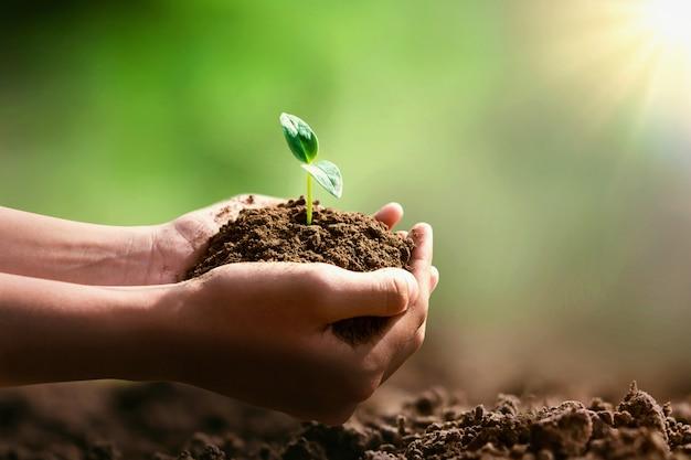 植栽と日差しのために小さな木を持っている手。エココンセプト