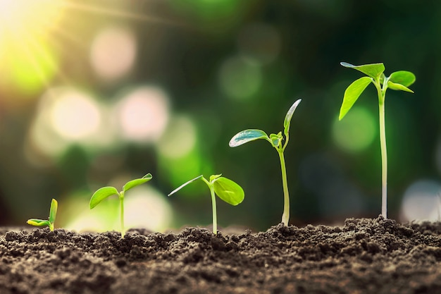 自然と太陽の下で若い植物成長ステップ