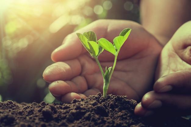 手は自然の中で日光で小さな木を守ります。農業の概念