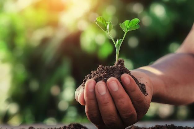 自然の中で日光と小さな木を持っている手。農業の概念