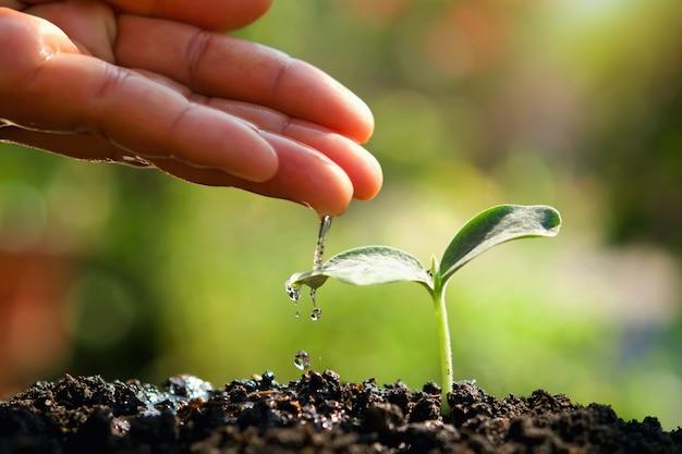 Поливать молодое растение в саду для ухода за новой жизнью