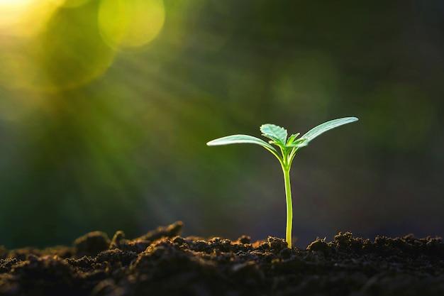 太陽の光と庭で成長している緑の芽