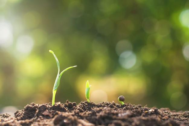 若い植物の成長ステップ庭の農業の概念