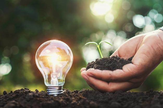 土と小さな木を持っている手の上の電球