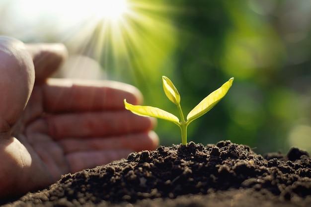太陽の光と庭でもやしを植える手
