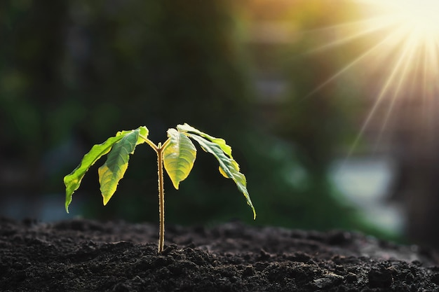 自然の中で土と朝の光で成長している若い植物