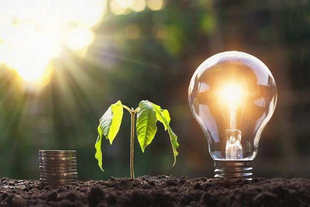 土の上の若い植物とコインスタックと電球。省エネとお金の概念