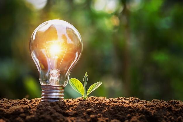 土と日差しの上に小さな植物が付いている電球。自然の中で省エネの概念