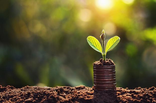 コインの日差しの背景に成長している植物。お金を節約の概念