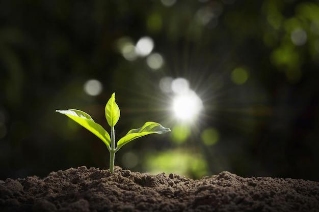 庭と朝の光の中で成長している若い植物