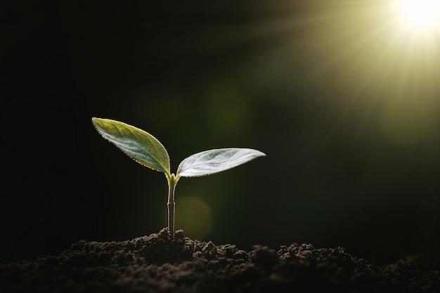 庭と日光で成長している小さな木。エココンセプト