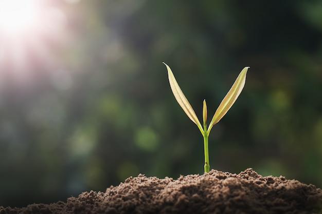 日光の庭で成長している小さな緑の木。エココンセプト