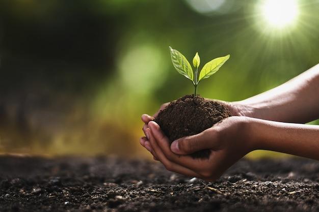 植栽のための小さな木を持っている手。コンセプトグリーンワールド