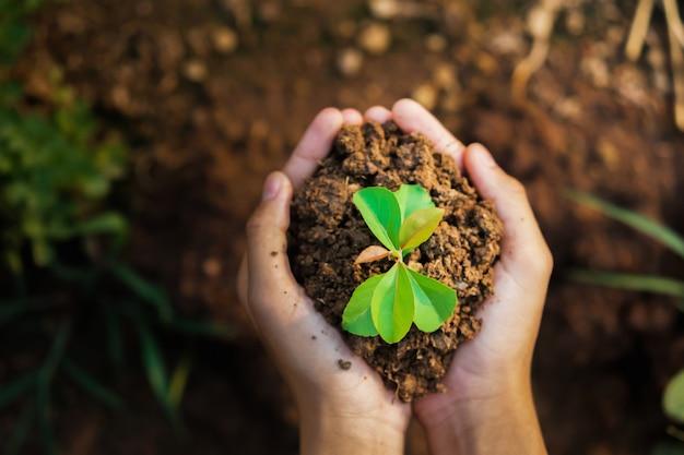 成長している若い植物を持っているトップビュー手。コンセプトエコと地球の日