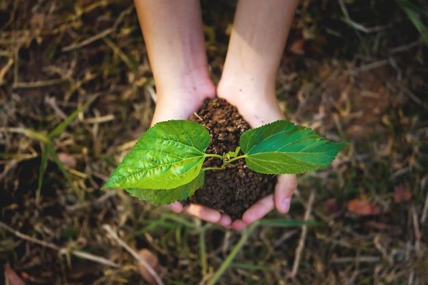 若い植物は草の背景を手に成長しています。エココンセプトアースデー