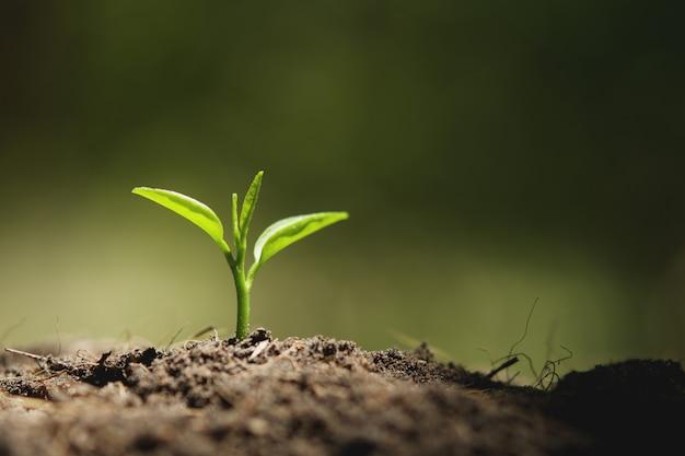 自然の中で太陽の光で成長している若い植物