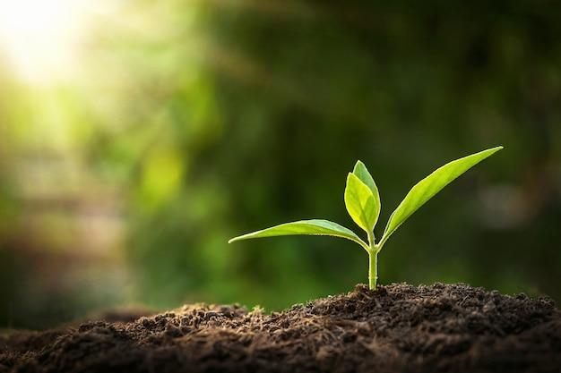 Молодое растение растет с солнцем в природе