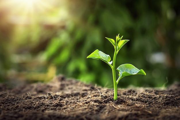 日の出と庭で成長している若い木。エココンセプトアースデー