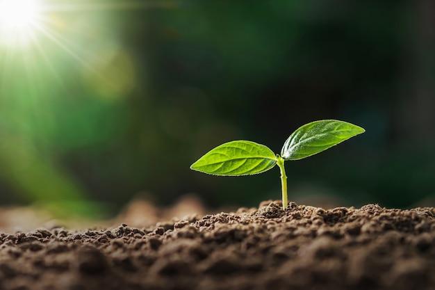 庭で朝の光で育つ小さな植物。コンセプトアースデー