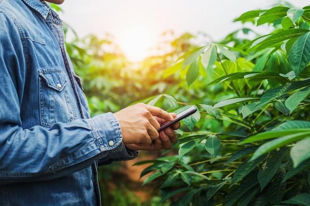 Люди, использующие мобильный отчет о проверке сельского хозяйства на ферме маниоки