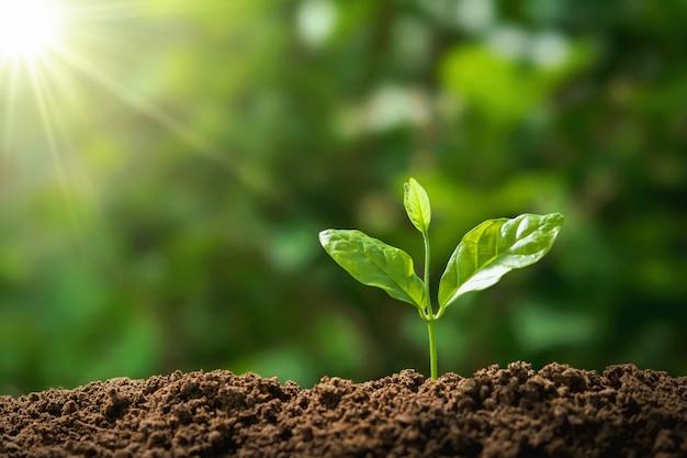 太陽の光と自然の中で成長している木。