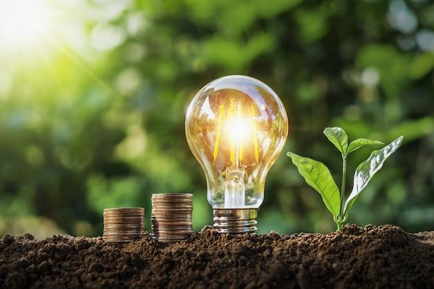 太陽の光で土の上に成長している電球とお金のスタックを植えます。コンセプト保存