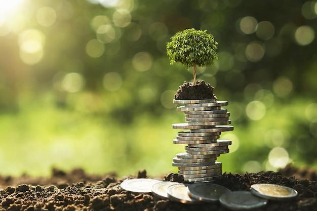 Дерево растет на стопку монет в природе с солнцем