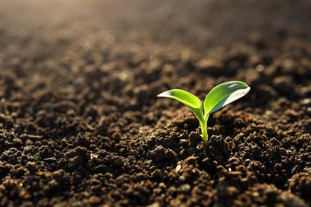 Маленькое растение растет в саду с солнцем