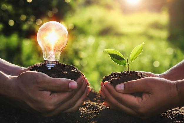 若い植物と電球を持っている手。