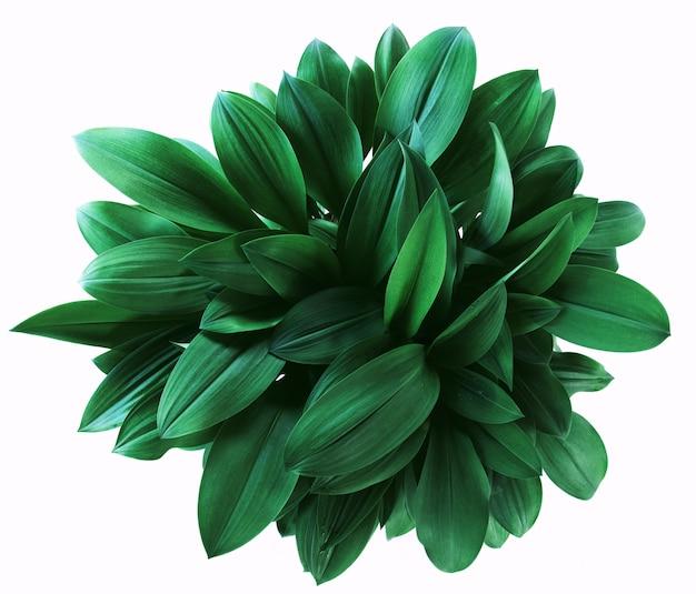 白の緑の葉の分離