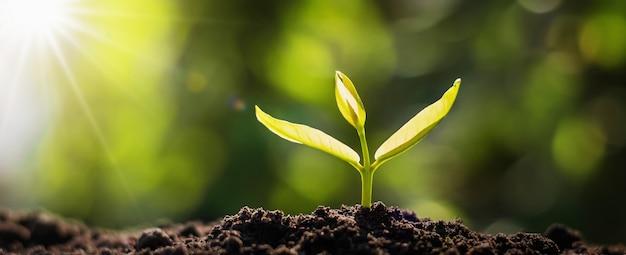 日の出と成長しているパノラマの小さな木