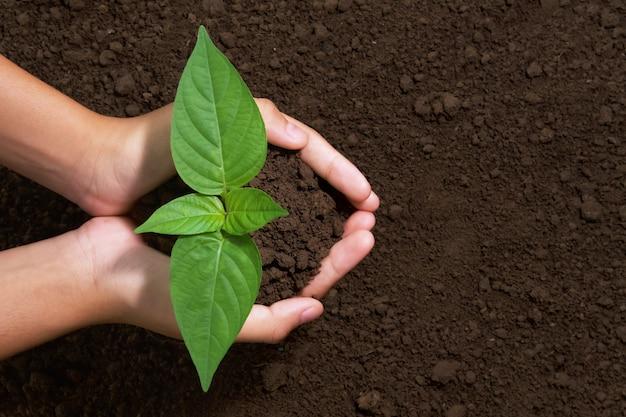 庭に植えるための若い木を持っているトップビュー手