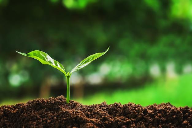 朝の光で庭の土に成長している若い植物。コンセプト地球を救う