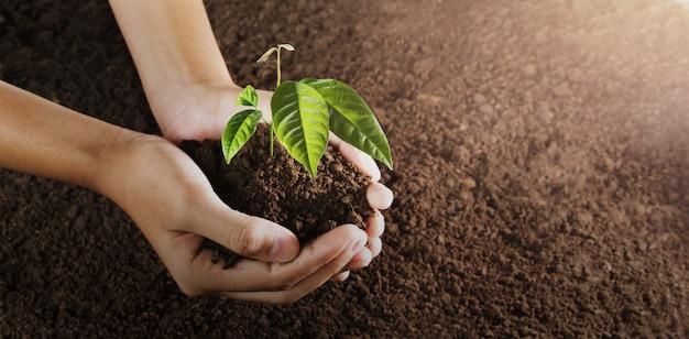 植わることのための小さな木を持っている手。コンセプトグリーンの世界。エコアースデー