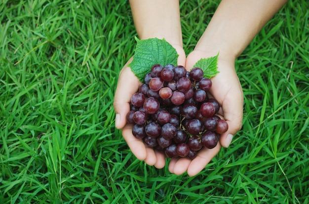 緑の草の手の農家ショーで熟した葡萄