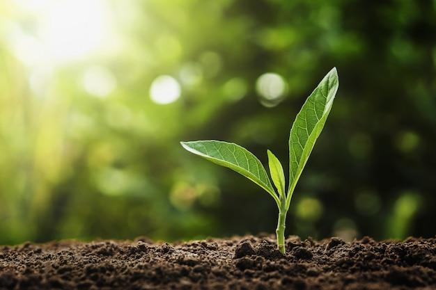 自然の中で太陽の光で成長している若い植物。農業と地球の日の概念
