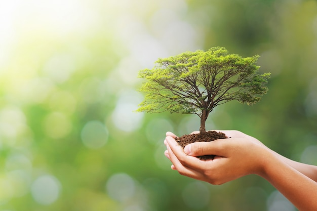 Рука держа дерево на природе нерезкости зеленой. эко день земли