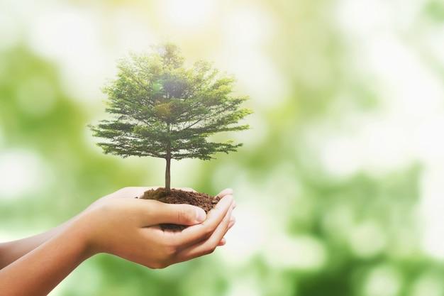自然に日光と木を持っている手は、世界と環境の地球の日を保存します