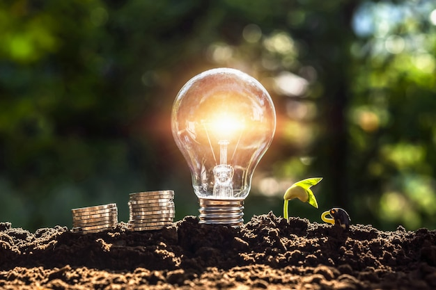 エネルギーの概念。エコパワー。お金と土壌の若い植物と電球