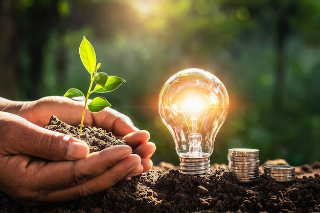 エネルギーの概念。エコパワー。お金と小さな木を持っている手と電球