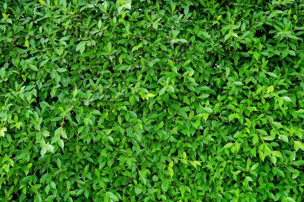 Зеленый лист фон
