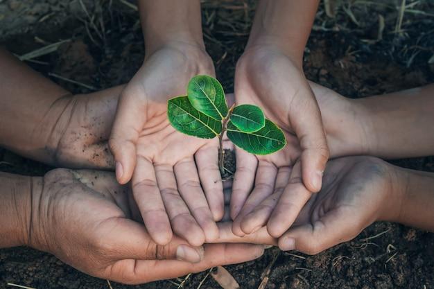 Дерево защиты рук в концепции сада спасает землю