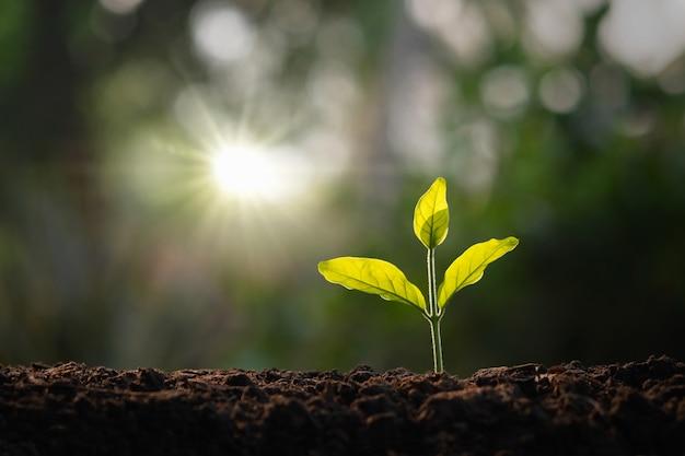 朝の光の庭で成長している小さな木。コンセプトエコと地球を救う