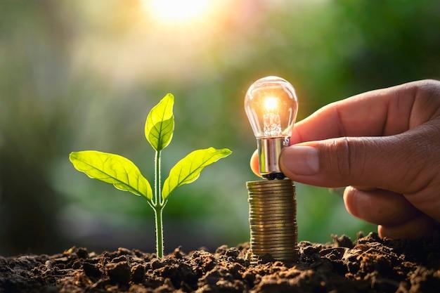 自然の中で電球のお金のスタックと若い植物を持っている手。省エネと会計財務の概念のアイデア