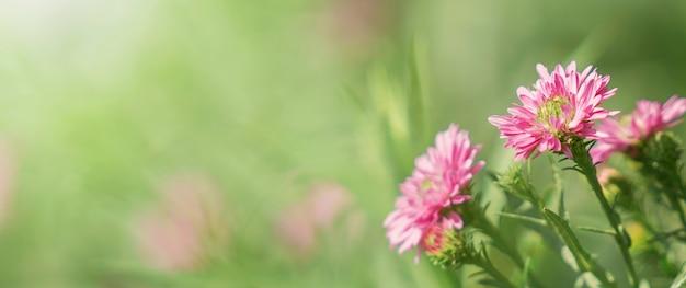 緑の背景にピンクの花