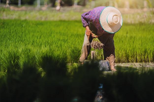 農家の田んぼでの作業