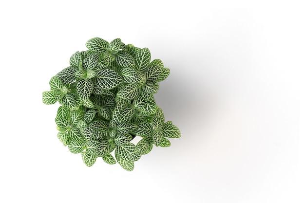 トップビュー緑色の植物は、鉢の中に白い背景に分離