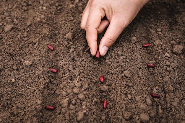 土壌に種子を植える農業手