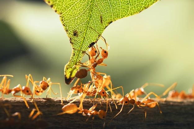 緑の葉で立っているチームワークの赤い蟻を閉じます
