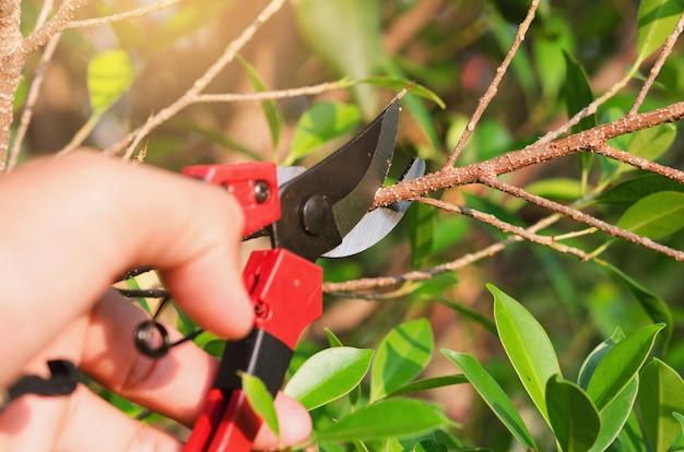 Крупным планом обрезки дерева и обрезки в саду